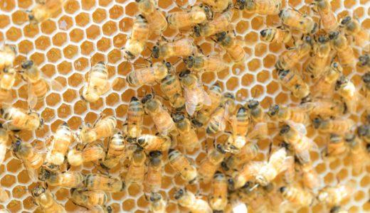 蜂蜜・黒蜜とメープルシロップの栄養やカロリーを比較:低カロリーとミネラル類の豊富さなら黒蜜がおすすめです。