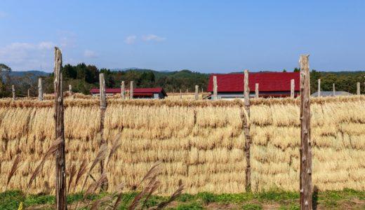 雑穀の栄養素1位を決める:近年再注目されるあわ・きび・ヒエなどの穀物で一番栄養価が高いのは何か?