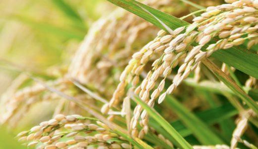 玄米の栄養はそれほど高くない:白飯とお粥などお米由来のご飯類のカロリーや栄養素を比較してみました。