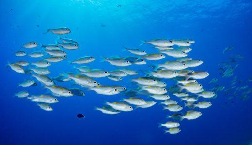 1日の目安量は10μg:微量ミネラルのクロムを豊富に含む食品を肉類・魚介類などジャンル別に公開