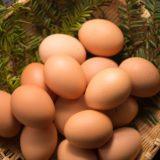 12 卵類