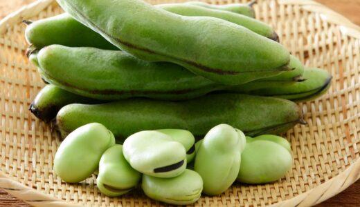 10種類の豆類から筋トレにおすすめな高タンパク低脂質な豆を紹介:いんげん豆とそら豆の驚くべき栄養価